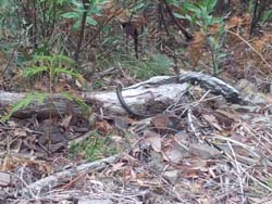 The snake I saw on Klingsporn Trail